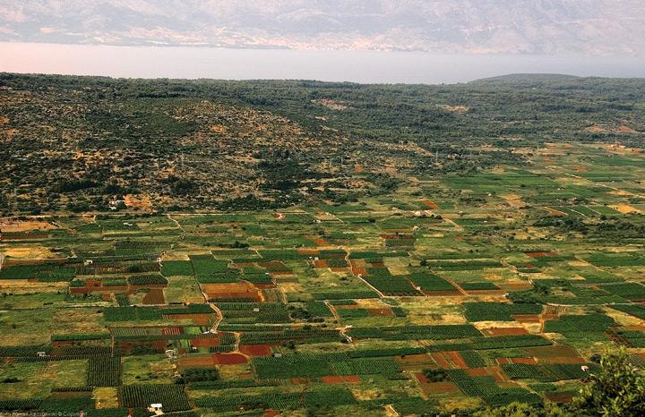 Starogradsko-polje