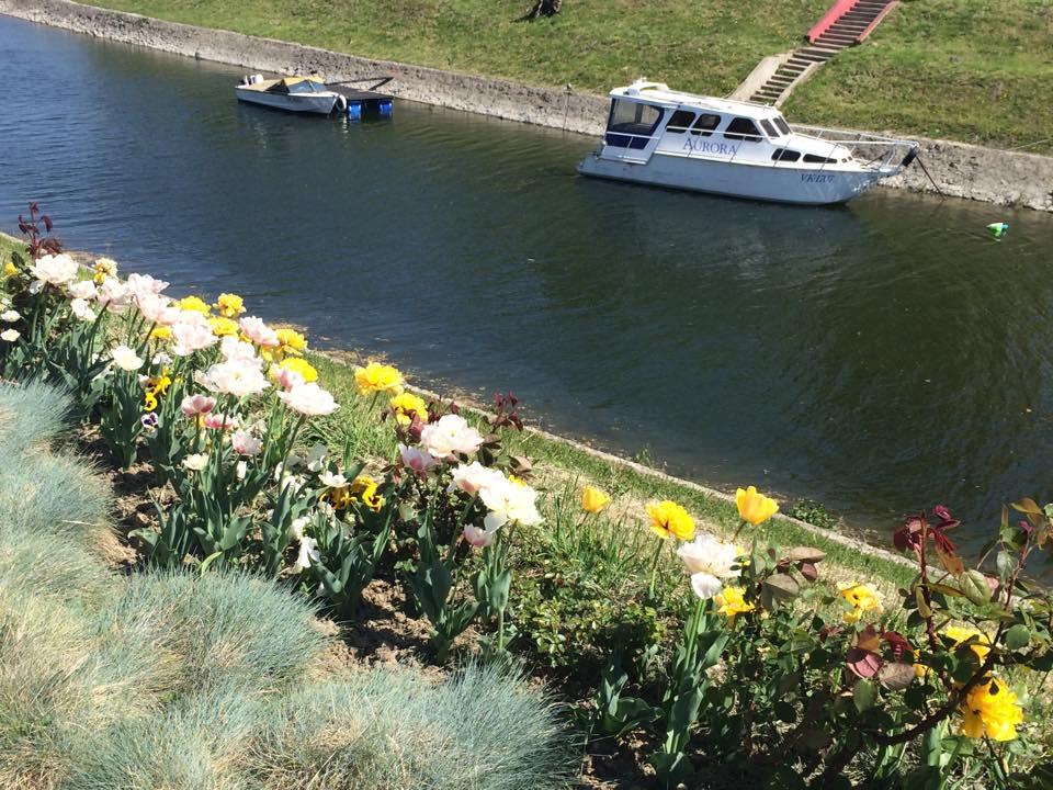 cvijeće Vukovar