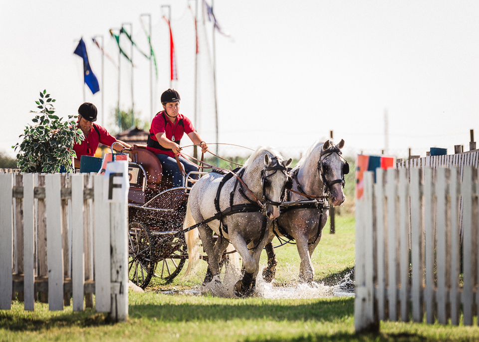 Konji Pleternica 1