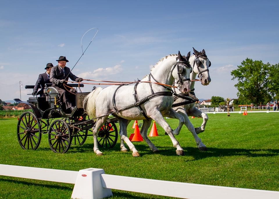 Konji Pleternica 2