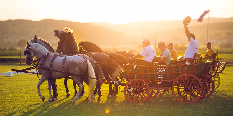 Konji Pleternica 4