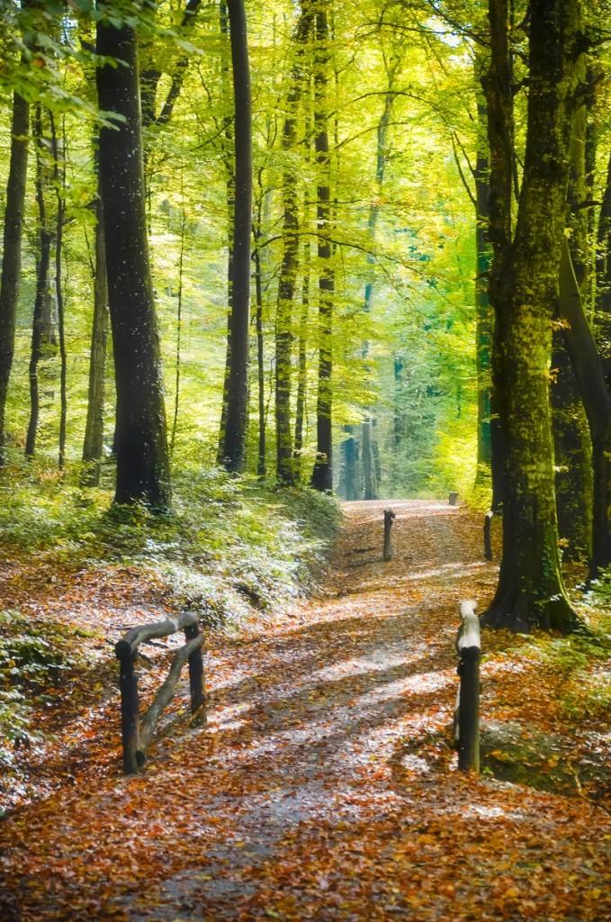 Rimska šuma, autor Predrag Uskoković