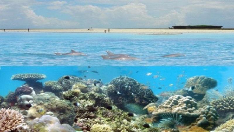 podvodni svijet