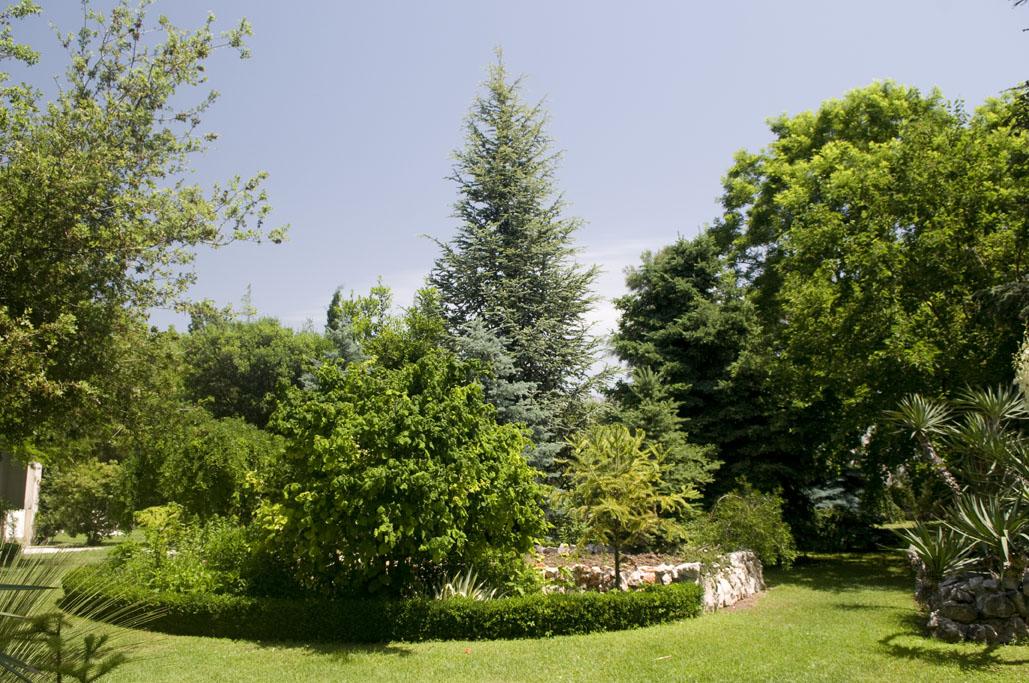 Botanicki Vrt Os Ostrog 2 K Luksic 1 Croatian Hot Spots